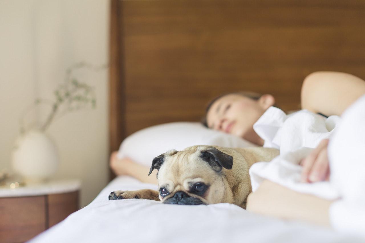 woman sleeping on bed next to sad dog