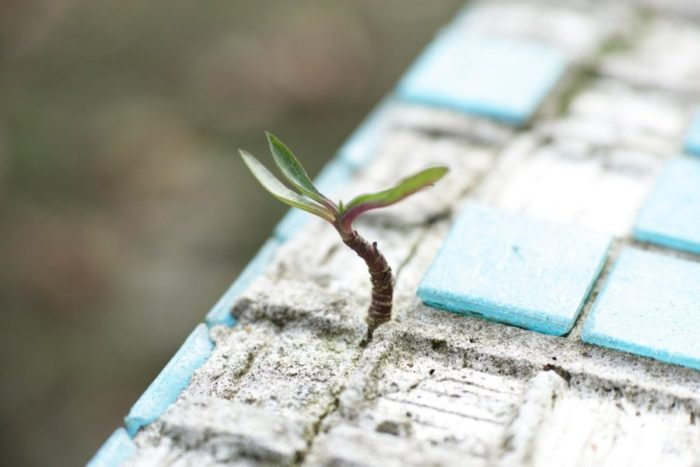 Small green plant growing out of concrete floor.